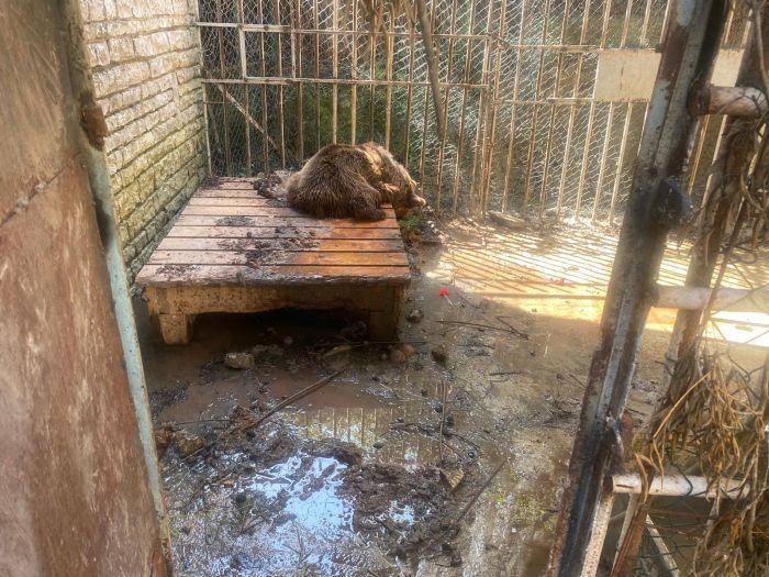 Un nuovo progetto per il recupero degli orsi