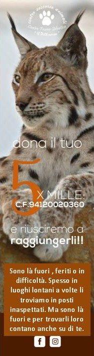 Ricordati del 5 x 1000 al Centro Fauna Selvatica Il Pettirosso
